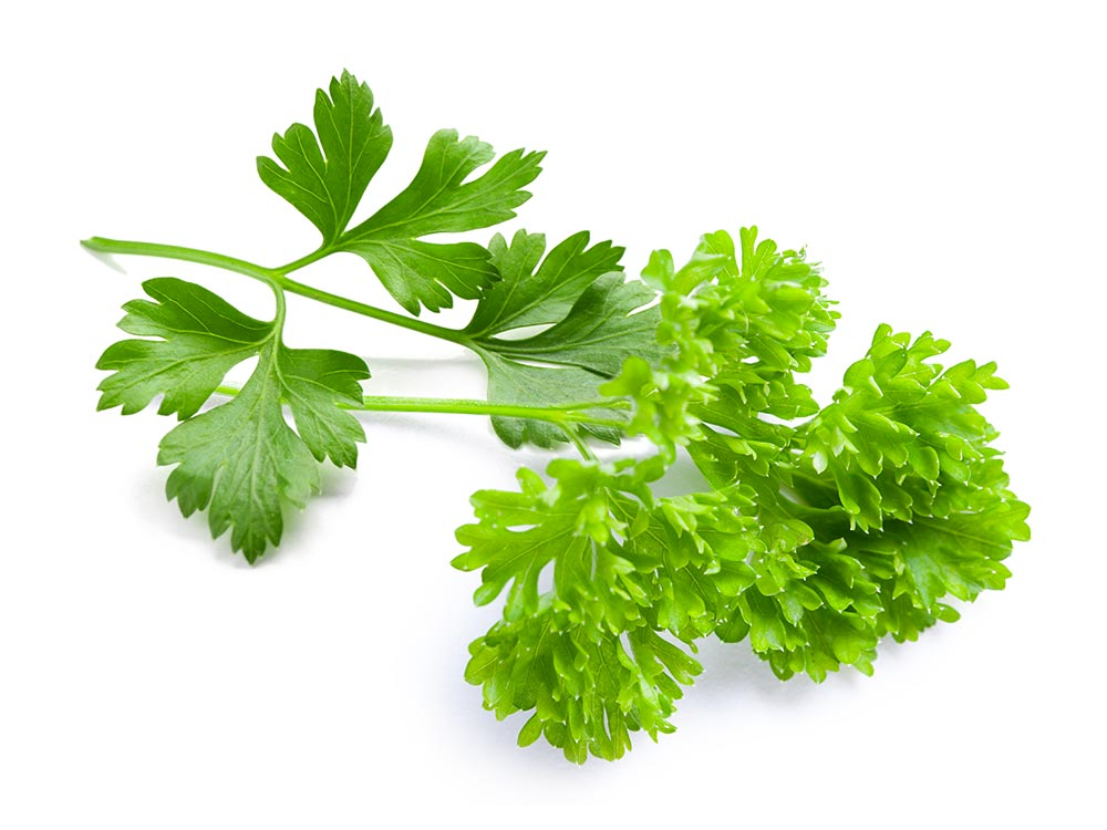 Parsley - Direct Fines Herbes